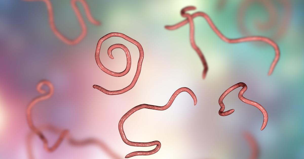 Pinworm tojásokat találtak, Pinworm tojás férgek, Enterobius-tojás